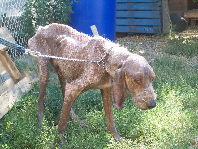 QUIVIVE-MALAGRO, croisé griffon de 8 ans (Adopté) 201_5017