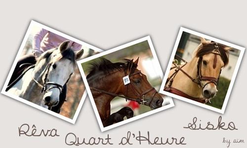 Chevaux de propriétaires [11 chevaux] - Page 3 Signat14