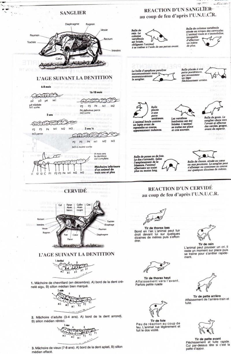 Servir - Page 2 Img05010