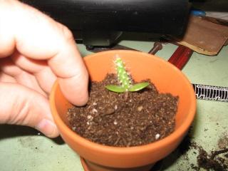 transplanter facilement avec ce petit outils Img_0617