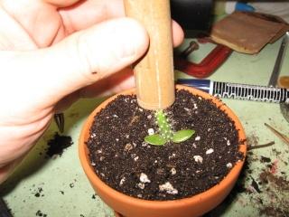 transplanter facilement avec ce petit outils Img_0619