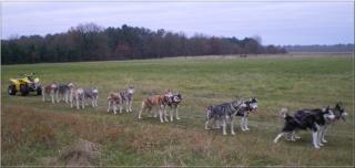 Des chiens en actions.... Imgp0011