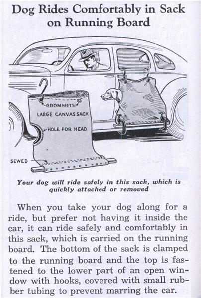 Une solution pour votre chien.... Lrg_do10