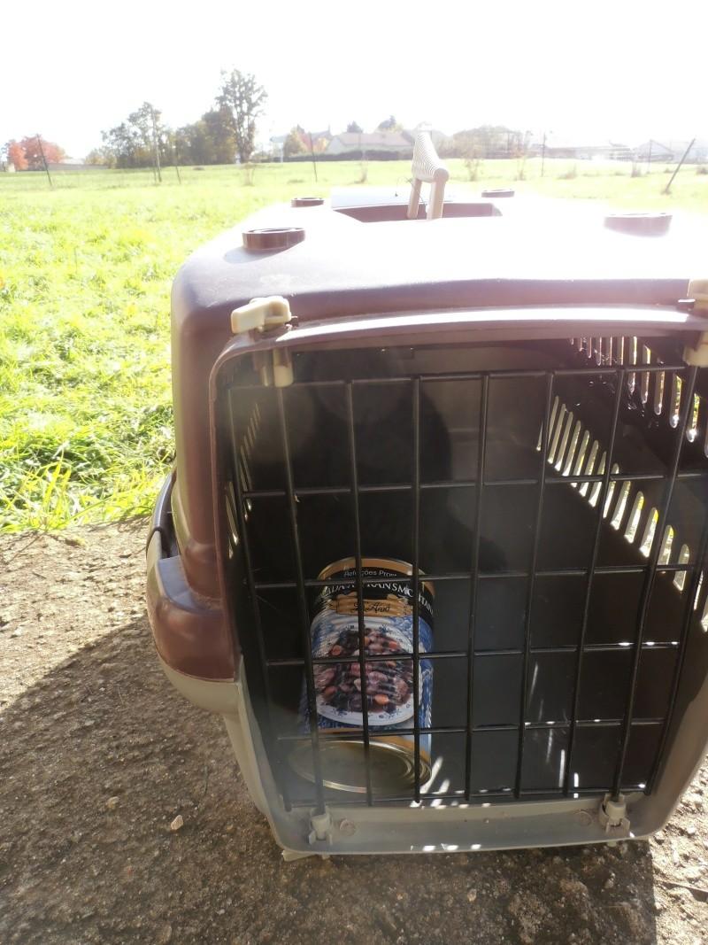 Sauvetage d'un chat noir.... Pb110011
