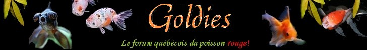 Goldies, le forum québecois du poisson rouge!