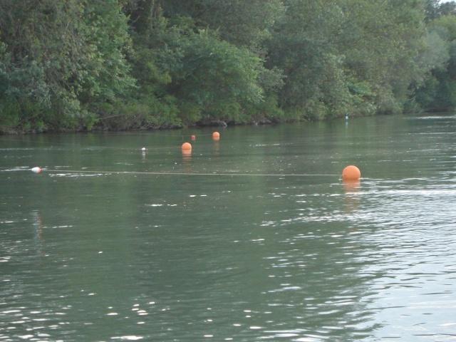 Pêche 100% sauvage sur le grand Rhône, Dsc00910