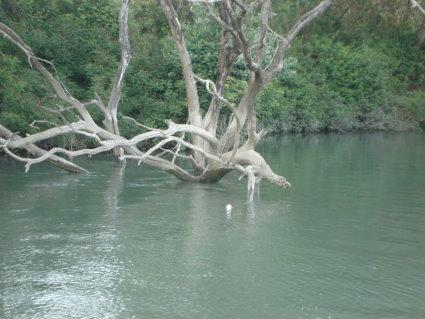 Pêche 100% sauvage sur le grand Rhône, Positi11