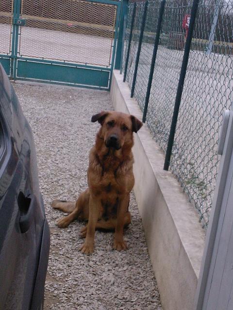 Thia jeune chienne à adopter (77) Photo025