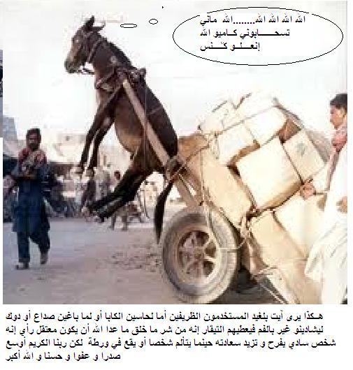 ايت بلعيد في شفشاون Images10
