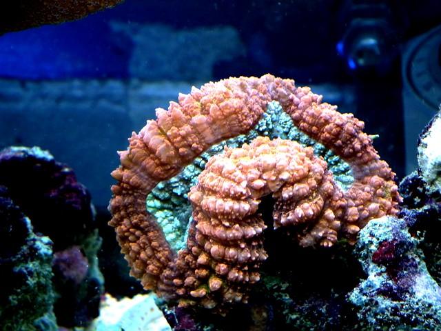 Lancement de mon premier aquarium marin - Page 8 Calo110