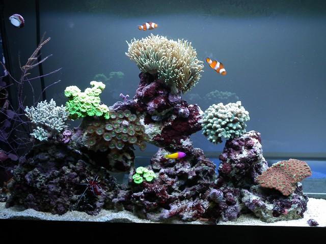 Lancement de mon premier aquarium marin - Page 8 Calo210