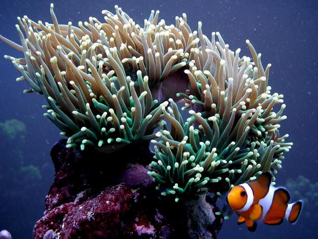 Lancement de mon premier aquarium marin - Page 8 Calo410