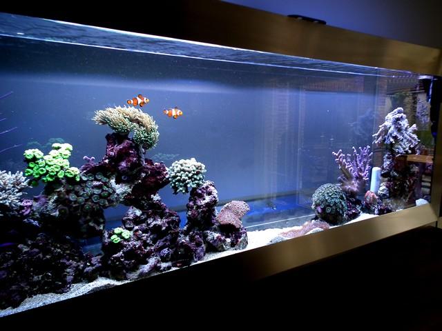 Lancement de mon premier aquarium marin - Page 8 Calo610
