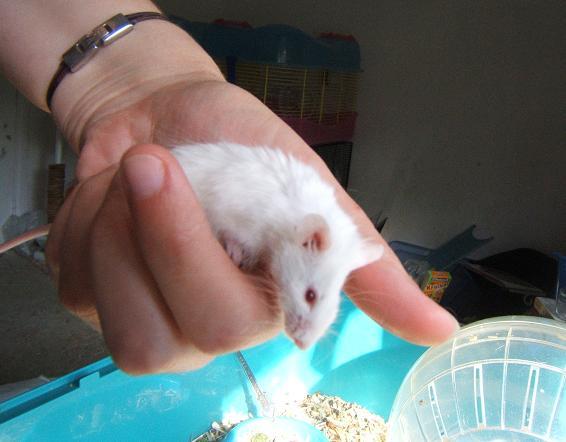 Plein de petites souris à l'adoption ! Petits11