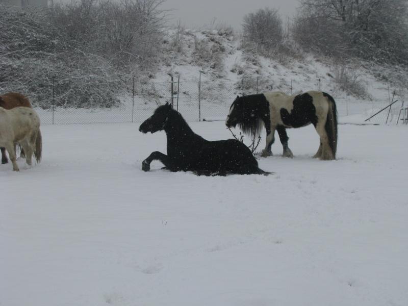 Mes chevaux dans la neige. Chevau12