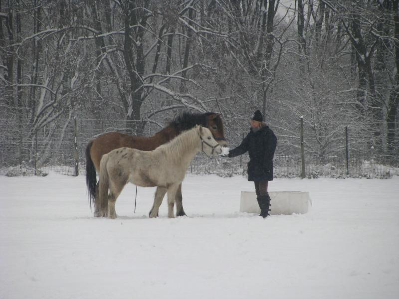 Mes chevaux dans la neige. Chevau14