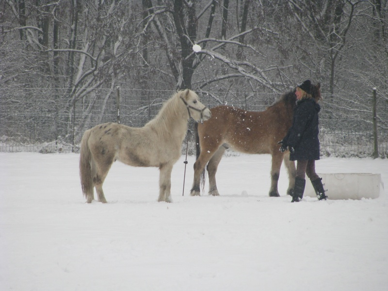 Mes chevaux dans la neige. Chevau15