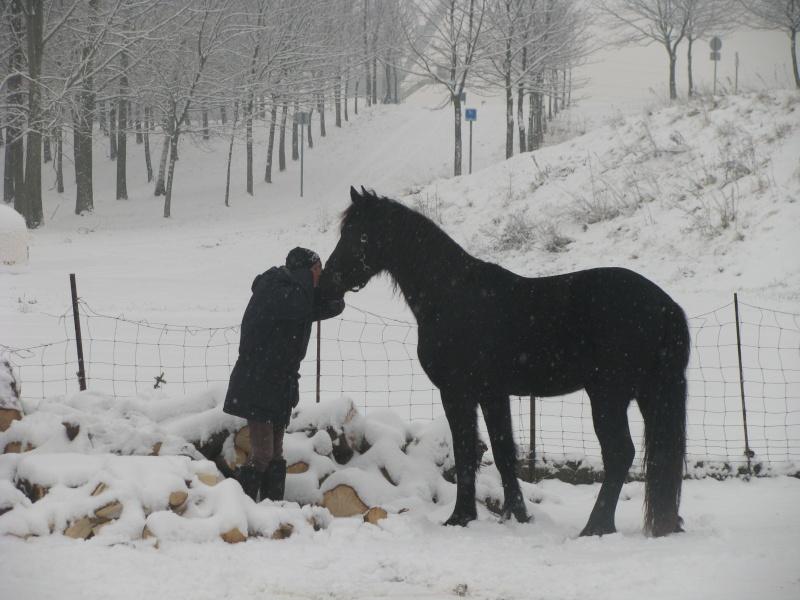 Mes chevaux dans la neige. Chevau16