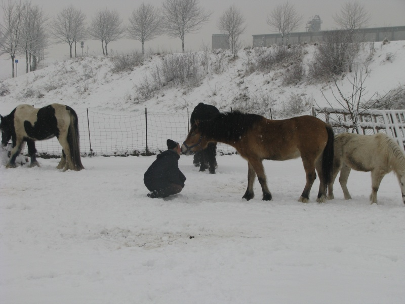 Mes chevaux dans la neige. Chevau17