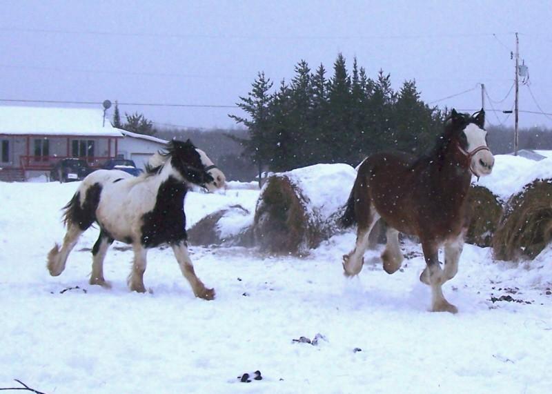 Gypsies et clydes dans la neige ...au québec !!! (new p3) 100_8312
