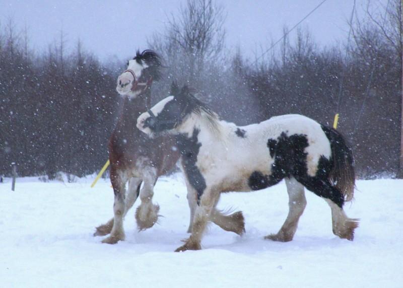 Gypsies et clydes dans la neige ...au québec !!! (new p3) 100_8421
