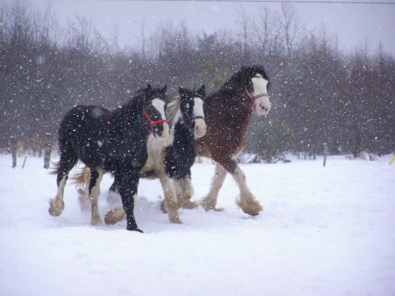 Gypsies et clydes dans la neige ...au québec !!! (new p3) 100_8424