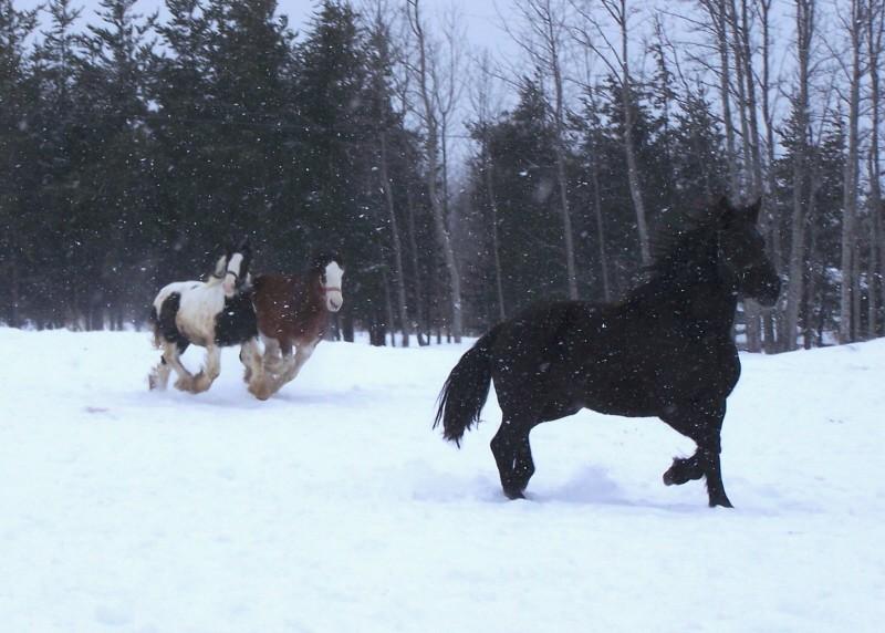 Gypsies et clydes dans la neige ...au québec !!! (new p3) At_pla10