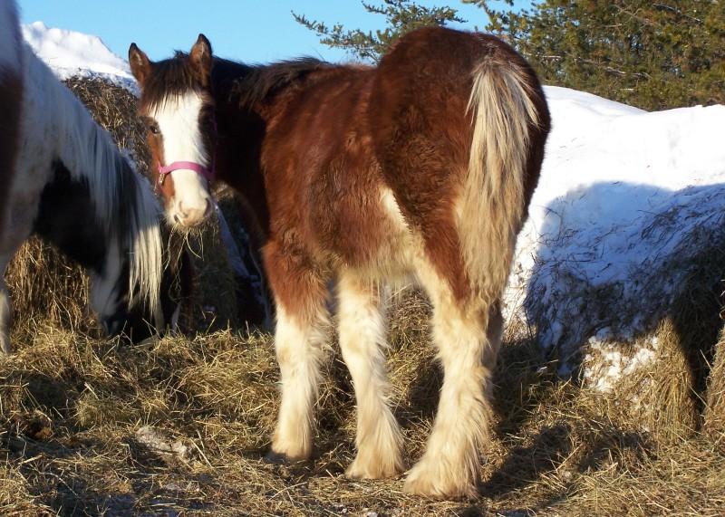 Gypsies et clydes dans la neige ...au québec !!! (new p3) Bonnie15