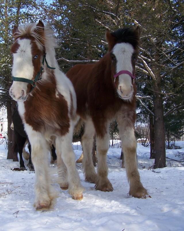Gypsies et clydes dans la neige ...au québec !!! (new p3) Bonnie17