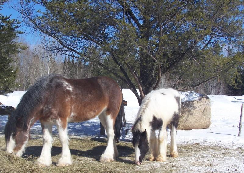Roxane grisonne (sondage: votre cheval change de couleur?) Couleu10