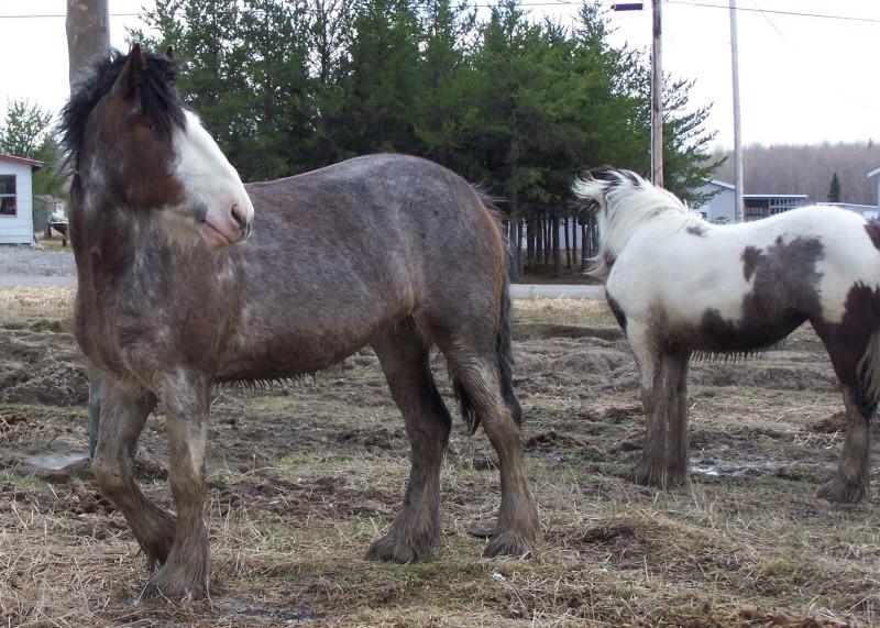 Roxane grisonne (sondage: votre cheval change de couleur?) Couleu11