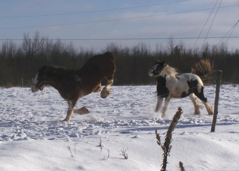 Gypsies et clydes dans la neige ...au québec !!! (new p3) Playyy10
