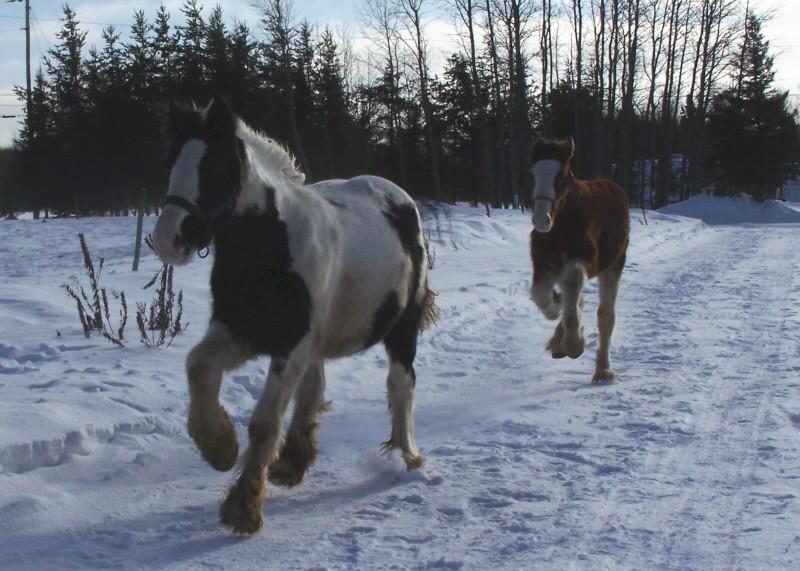 Gypsies et clydes dans la neige ...au québec !!! (new p3) Run_wi11