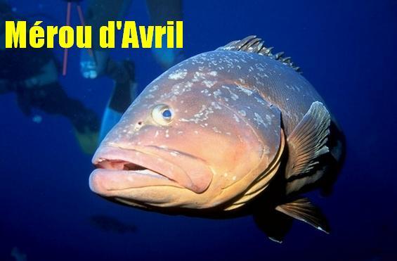 poisson d'avril... Avril10