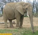 L'alphabet en images (animaux) L400xh10