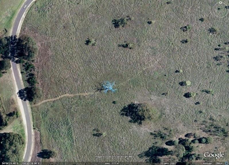 Un arbre bleu.. - Mount Annan (près de Sydney) - Australie Arbre_10