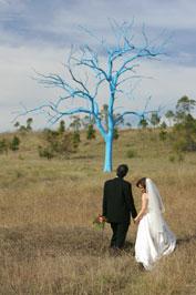 Un arbre bleu.. - Mount Annan (près de Sydney) - Australie Arbre_11