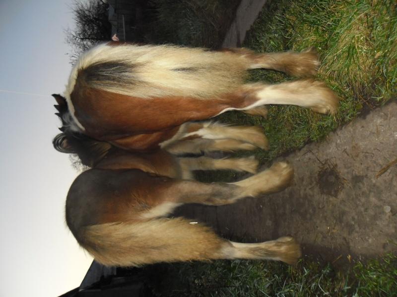 diana - 15/11/2011 Houtem15