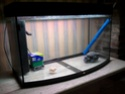 Vend: Aquarium complet 250 litres, longueur125cm X largeur 40cm X hauteur 60cm + Aquarium Vision 180 litres panoramique en parfait état 2011-111