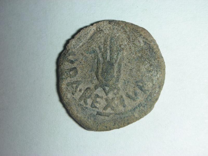 Semis de Cartago Nova. Moneda17