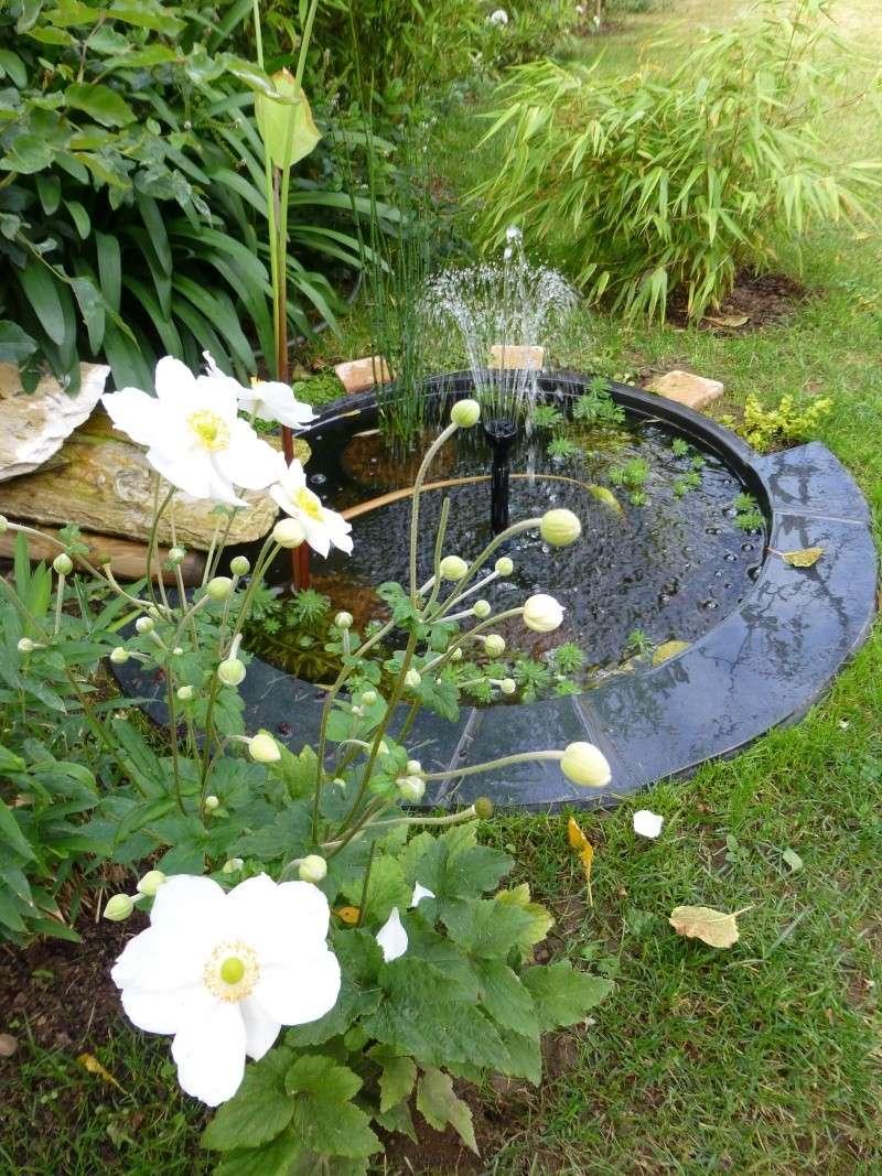Nos bambous , en pots et jardin .  P1020810