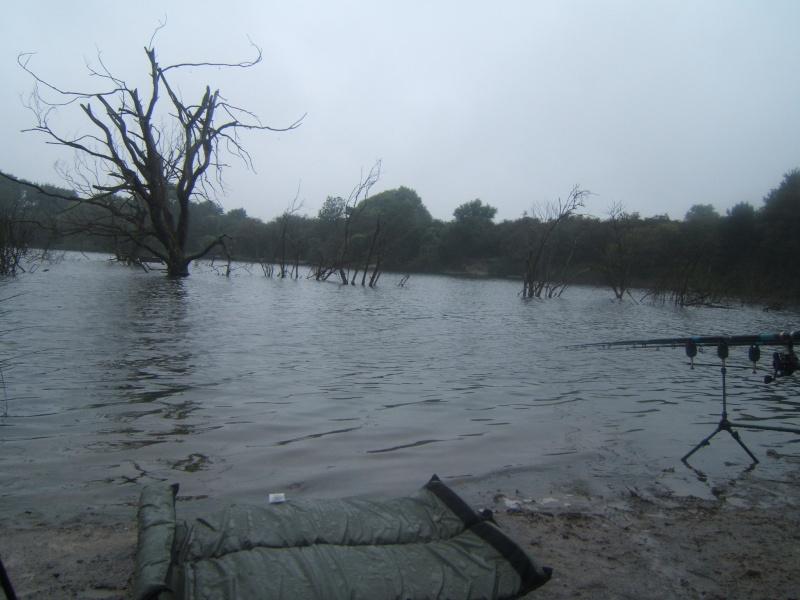 l'étang de harnes Arbre10