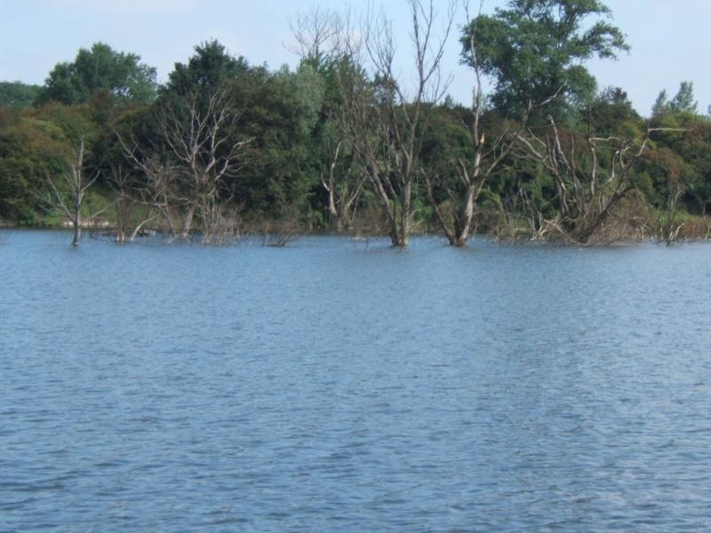 l'étang de harnes Arbre_10