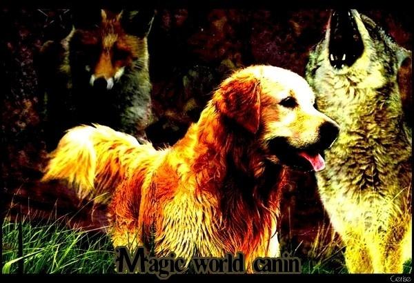 [Forum] Magic World Canin (nouveau concept) 04553611