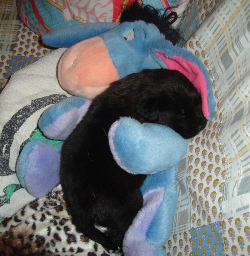 Marley, croisée Rott Labrador ( je l'ai re-rebaptisée, pff ! Dsc06810