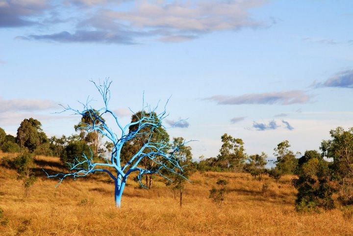 Un arbre bleu.. - Mount Annan (près de Sydney) - Australie Dsc_0010