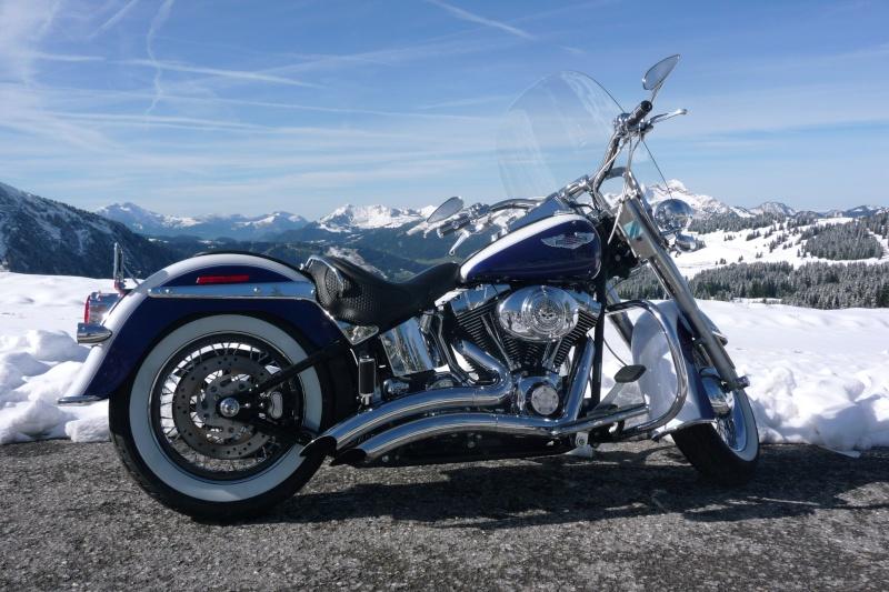 Combien de Softail sur le forum Passion-Harley P1010813
