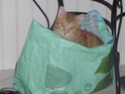 chat perdu Rouxy10