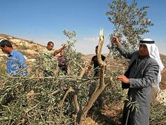 Solidaridad con el pueblo palestino - Página 5 P034_f13
