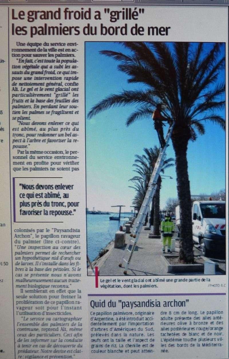 LA VEGETATION MEDITERRANEENNE - Page 6 P1270329